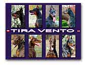 Tira Vento FCI - Dobermann Kennel