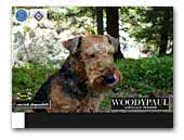 Woodypaul Airedale Terrier