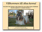 Shih Tzu Kennel Aksu