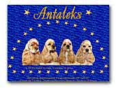 American Cocker Spaniel Kennel Antaleks