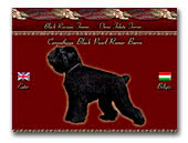 Black Russian Terrier Carpathian Black Pearl Ramir Baron