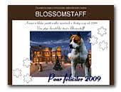 Blosssomstaff kennel of AST