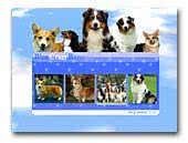 Australian Shepherd and Welsh Corgi Pembroke Blue Crazy Breeze