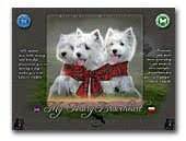 My Hairy Braveheart West Highland White Terriers