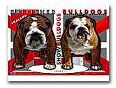 Britisher Show Bulldogs