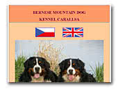 Carallsa Bernese Mountain Dog Kennel
