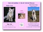 Vale das Princesas White Swiss Shepherd Dogs