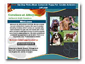 Cavaliers at Abbeymore