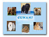 Chow Chows Kennel Cunami