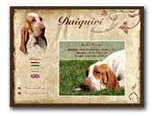 Daiquiri Bracco Italiano Kennels