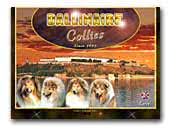Dallinaire Collies