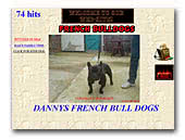 Dannys French Bulldogs