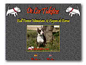 De Los Tukitos Miniature Bull Terrier and Bernese Mountain Dog Kennel
