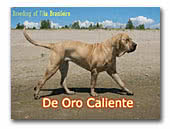 kennel De Oro Caliente