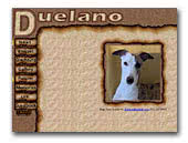 Duelano Whippets