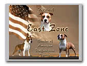 East Zone American Staffordshire Terrier
