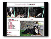 Bernese Moutain Dog Duok Labas