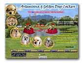 Artemisina & Golden Dogs Kennel