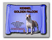 kennel Golden Falcon