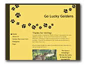 Go Lucky Golden Retrievers