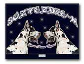 Sozvezdie-M  Great Danes Kennel