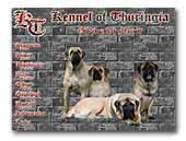 Old English Mastiffs Of Thuringia