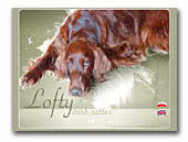 Lofty Irish Red Setter kennel