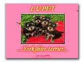 Yorkshire Terriers  kennel Lupet
