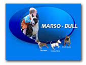 Bull Terriers Marso-Bull Kennel