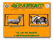 Basset Hounds dei Due Briganti Kennel