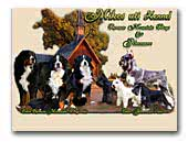 Bernese Mountain Dogs & Schnauzers kennel Mikes uti