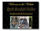 Mysticmoonlight Shetland Sheepdog kennel
