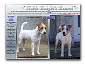 Noble Knight's Jack Russell Terrier Kennel
