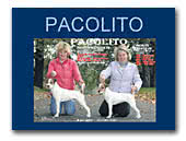 Pacolito Parson Russell Terriers
