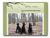 Black Giant schnauzers Kennel Pasala