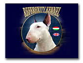 Bull Terriers Kennel Referexity