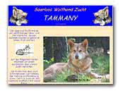 Saarlooswolfhond Kennel Tammany