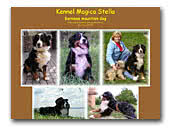 Magica Stella Kennel