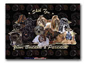 Shih Tzu from Buddha's Paradise Kennel