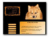 Toumai, a male of German Spitz Mittlespitz