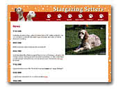 English Setters Stargazing