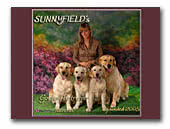 Sunnyfield's Golden Retriever kennel