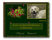 Sweet Loving Heart Golden Retrievers