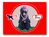 Black Terriers Kennel Inima Mea