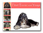 Tibet Terier of Ynaya